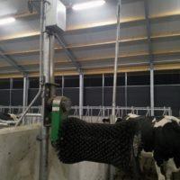 Comfy cow koeborstel (2)